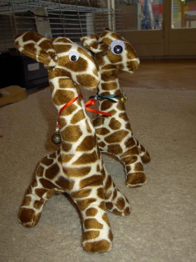 2 giraffesb